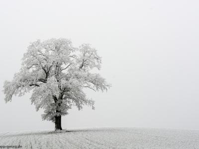 Winterbaum_1